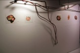 Installation Shot of Flower Studies